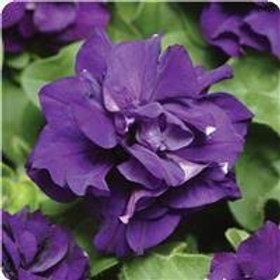 Petunia Madness Blue Flat 32 plants