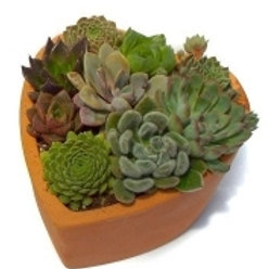 SUCCULENT CLAY HEART 6INCH