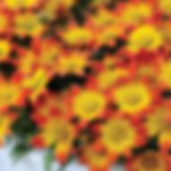bidens bee dance painted red.jpg