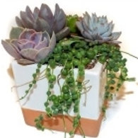 SUCCULENT WHITE CLAY 2.5INCH POT