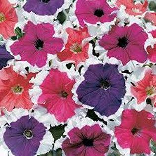 Petunia Frost Mix Flat 32 plants