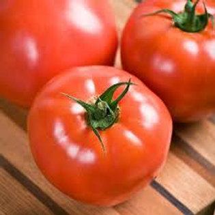 Celebrity Tomato Single 3in pot