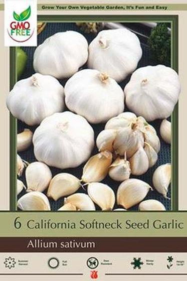 GARLIC CALIFORNIA SOFTNECK