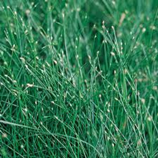 ANNUAL GRASS FIBEROPTIC