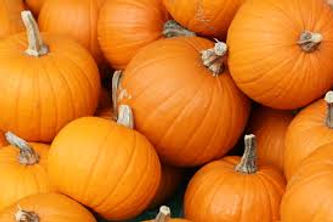 pie pumpkins.jpg