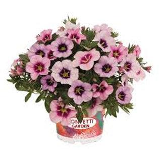 Kwik Combo Bloomtastic Blossom  6.5in pot