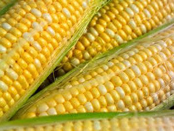 Sweet Corn Baker's Dozen (13 ears)
