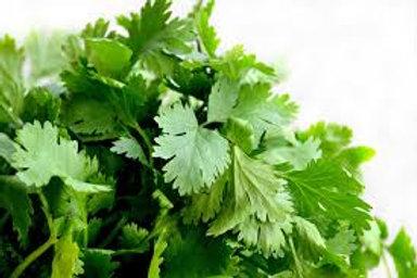 Herb CILANTRO/CORRIANDER 4inch pot