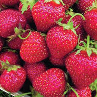 Strawberry All Star 6 pack JUNE BEARING