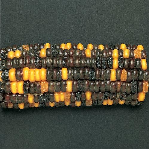 Corn Segregating Ear, R and Su Alleles 9:3:3:1