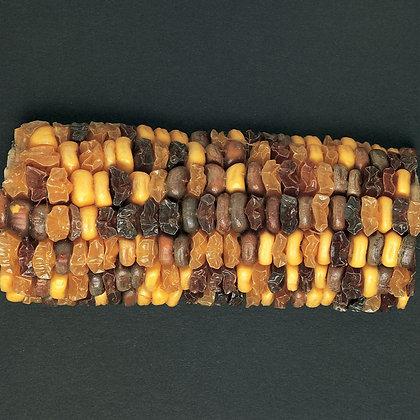 Corn Segregating Ear, R and Su Alleles 1:1:1:1