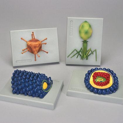 Altay Typical Viruses Model Set