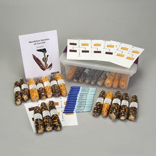 Mendelian Genetics of Corn Kit