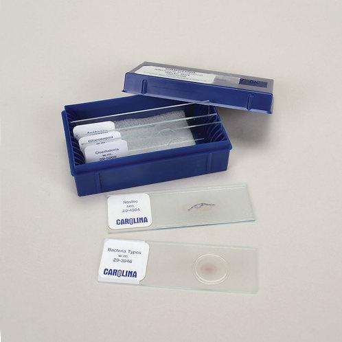 Monera Kingdom Microscope Slide Set