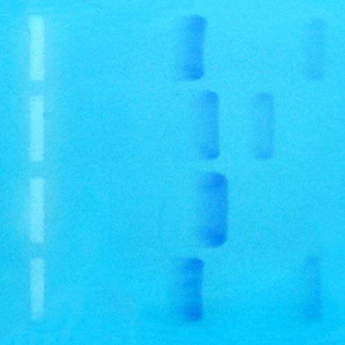 Bulk Suspect 2 DNA, per mL