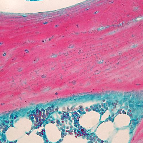 Mammal Fibrocartilage Slide