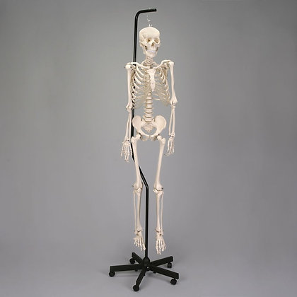 Economy Hang-up Skeleton