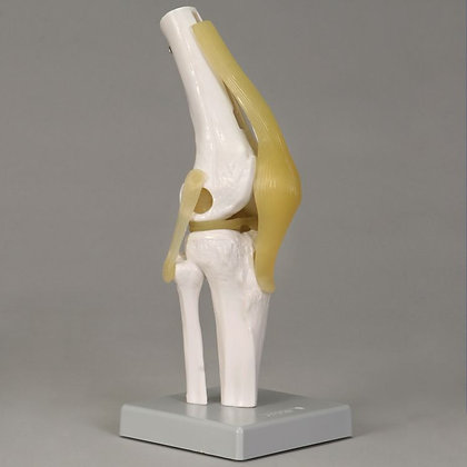 Altay Economy Knee Joint Model