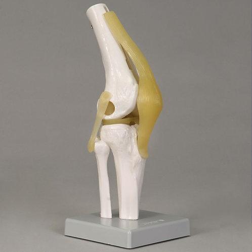 Altay Economy Knee Joint Model