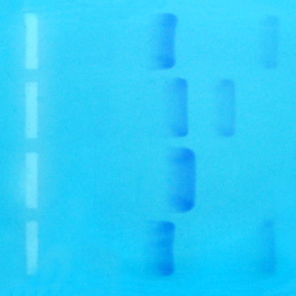 Bulk Evidence DNA, per mL