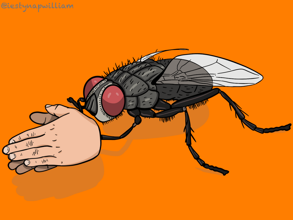 Fly close-up