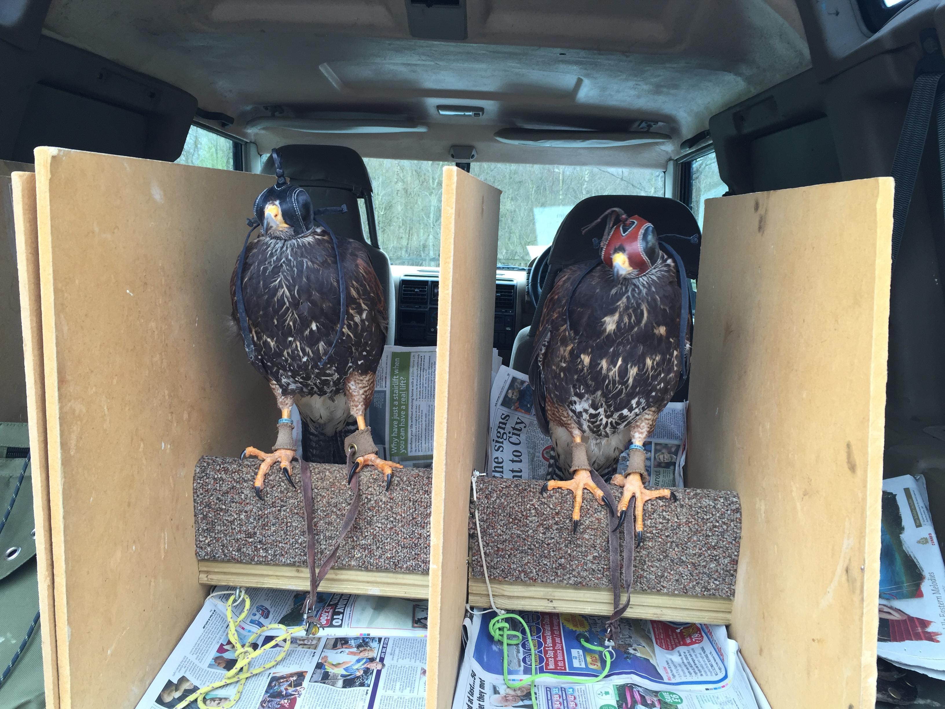 Toyah & Gloria - ready to go to work