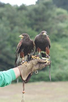 Hawks 9 (1).jpg