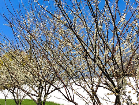Spring at Sky Orchard