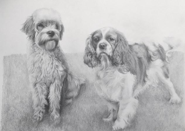 Alfie & Chester