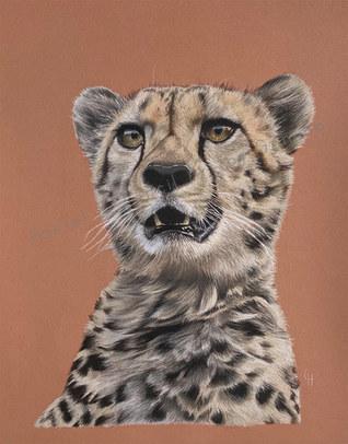 Cheetah - Amber