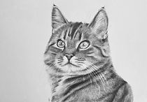 Cat - Pastel & Pencil Art by Gemma.jpg