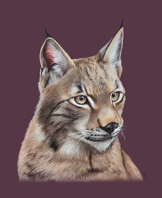 Lynx - Amethyst