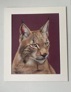 Lynx - Original