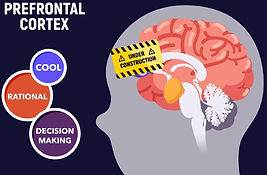 prefrontal cortex.JPG