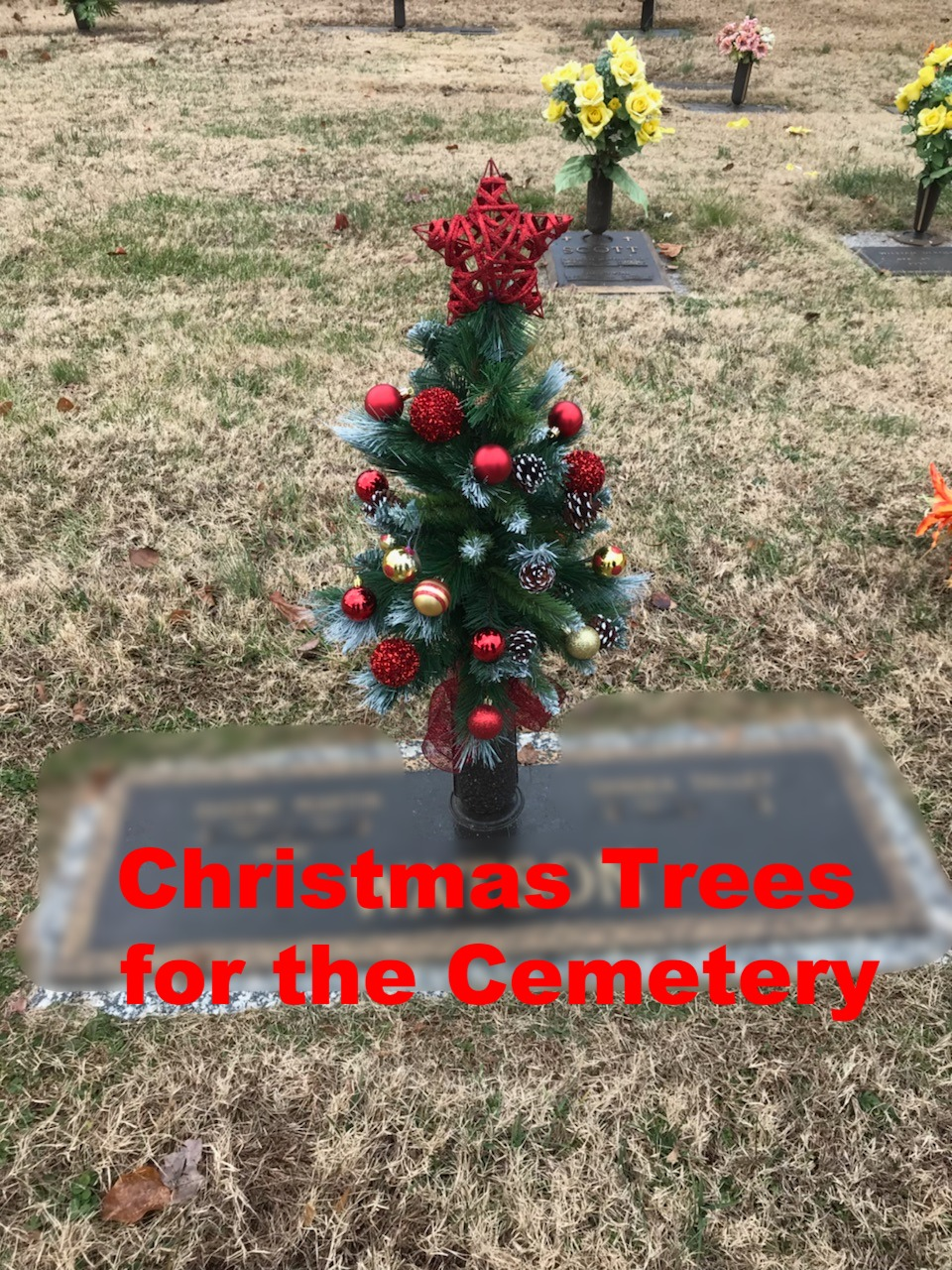Christmas trees available!