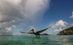 Lunch Time, St. John Photography
