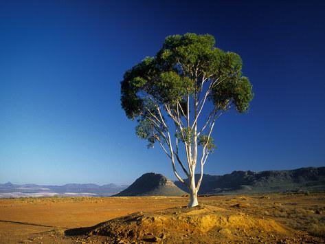 Cedarberg, South Africa