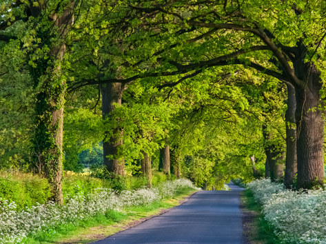 Country Lane, Leicestershire