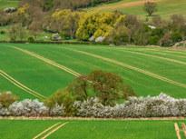 Rural England at Springtime