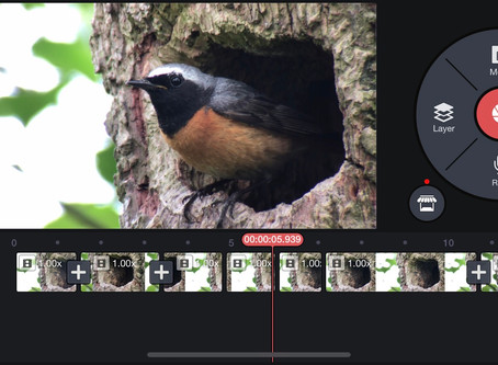 Video editing apps head to head review