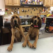 Maple & Harley.bmp