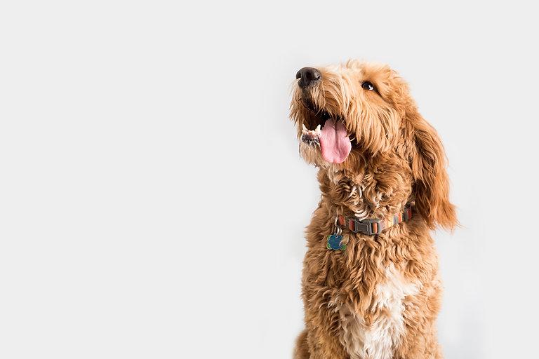 cão salivando blog all love