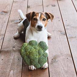 Por que oferecer um alimento orgânico para seu pet?