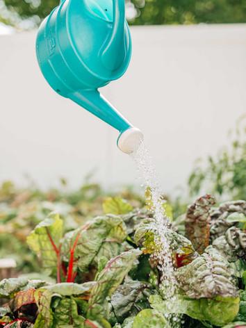 watering-garden.jpg