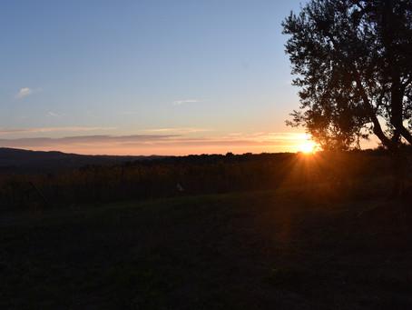 Il Brunello del tramonto.