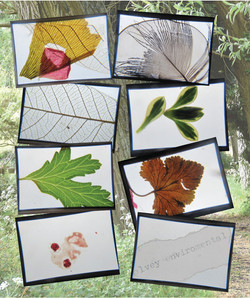 Environmental group slides