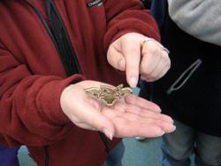 Wolvey Environmental Group, Moth Night
