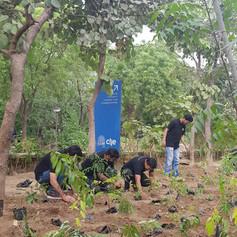 Plantation drive at CIIE, IIM Ahmedabad