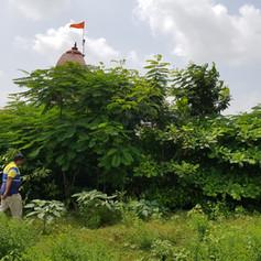 Boundary plantations