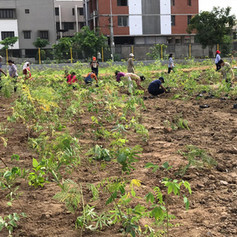 Plantation Drives